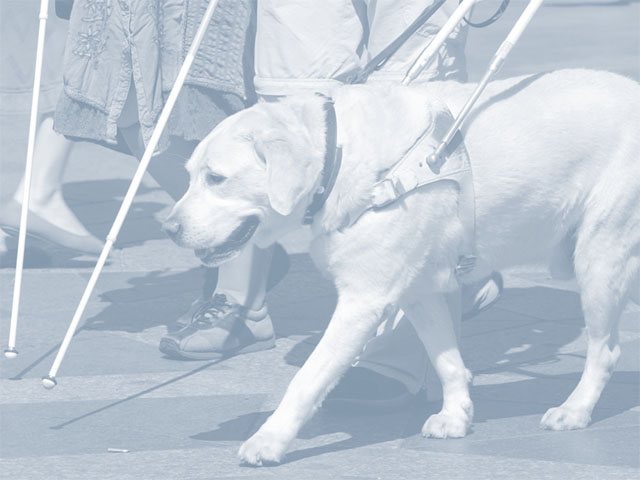 Assistance and Service Animals link