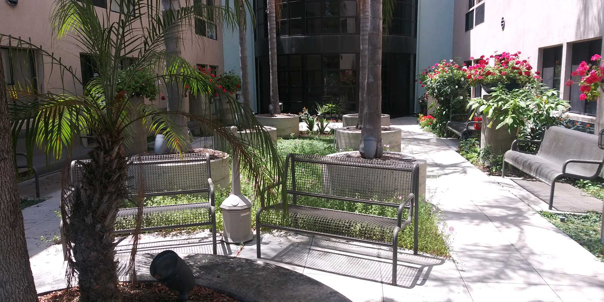 View of courtyard. In the center are six large evenly spaced palm trees in planters with side walk access on either side. Park bench seating throughout courtyard. Flower planters along building