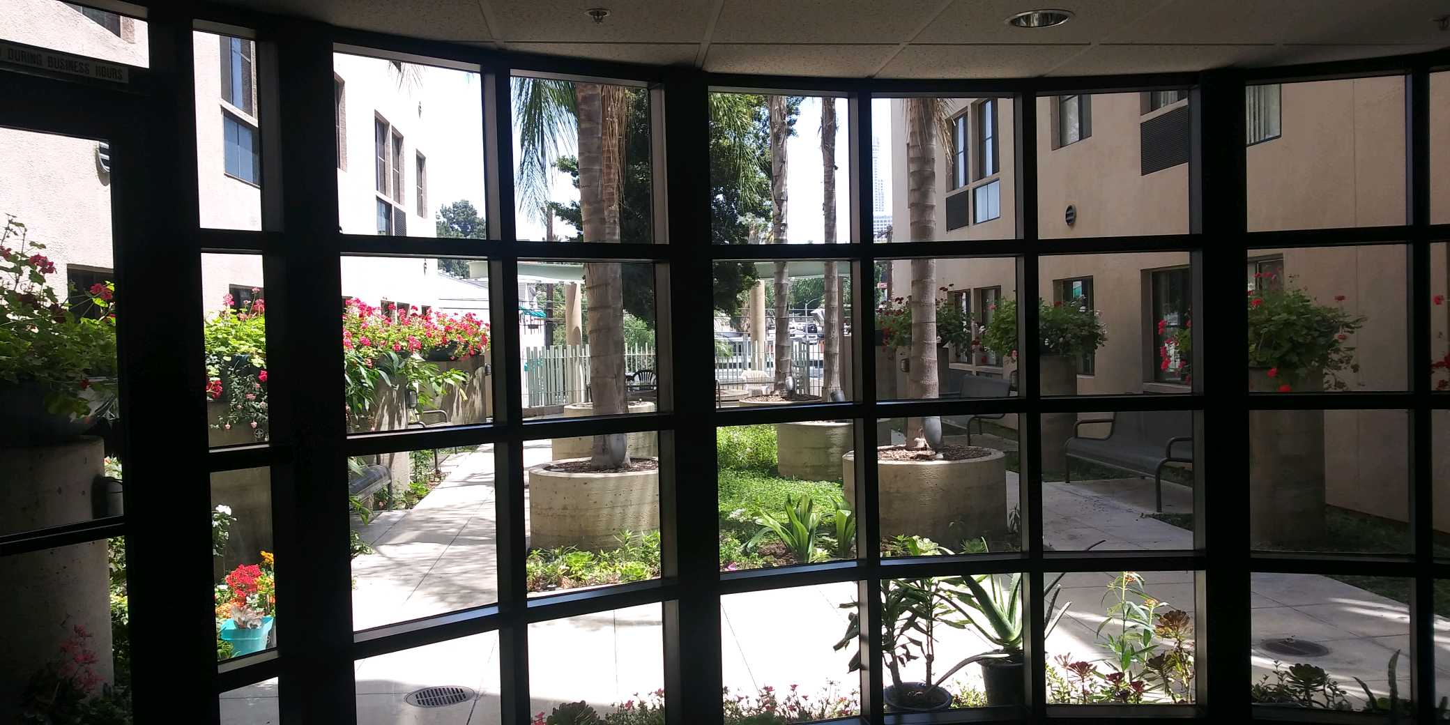 View of courtyard from inside building window. In the center are six large evenly spaced palm trees in planters with side walk access on either side. Park bench seating throughout courtyard. Flower planters along building